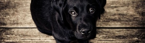 Seeing Eye Dogs Australia holiday program
