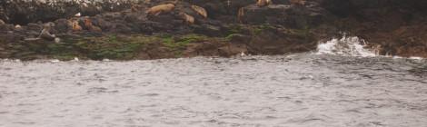 Phillip Island Nature Parks EcoBoat Adventures