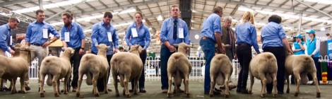Royal Melbourne Show 2016 (what we did)