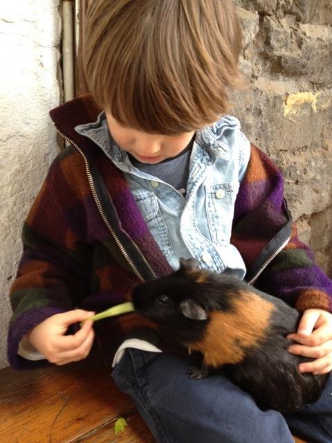 Collingwood_childrens_farm09