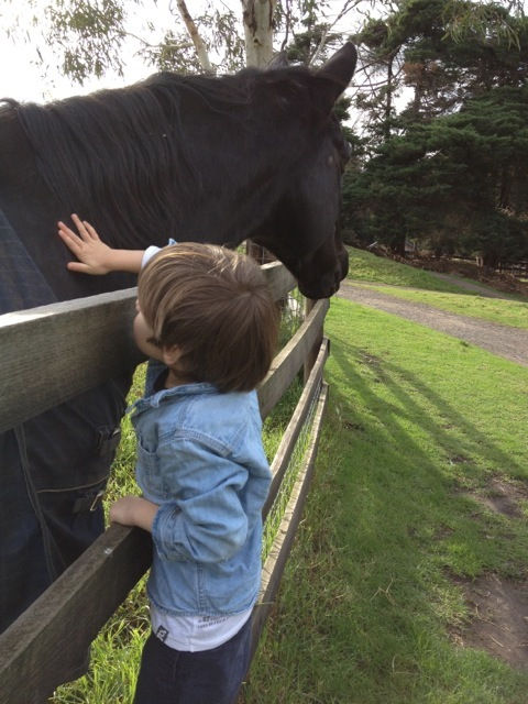 Collingwood_childrens_farm14