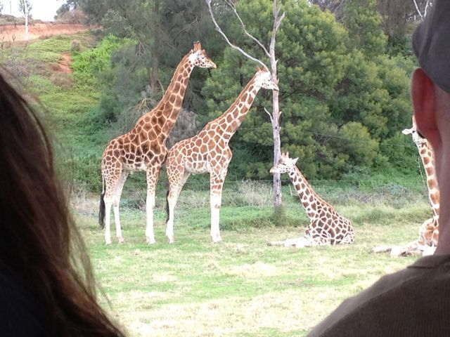 Up close and personal at the Werribee Zoo