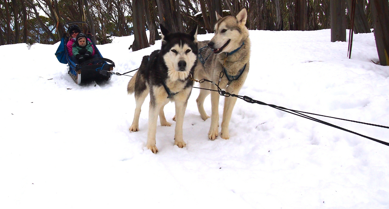 Howling Huskys Sled Dog Tours