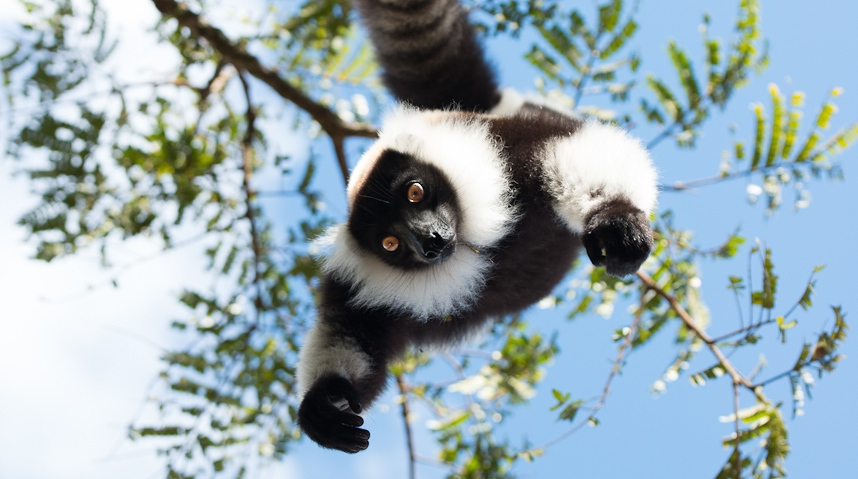 Escape to the Island of Lemurs in Amazing IMAX 3D